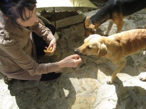 Sharon Gannon feeding street dogs in Mexico
