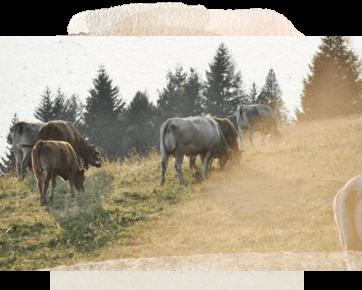 Sharon Demystifies Common Milk Myths