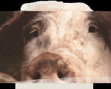 Cruel Practices in Animal Farms